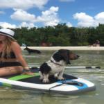 emma the bassett hound paddle boarding - image