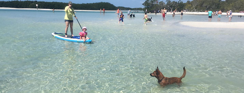 dog paddle boarding adventure - image